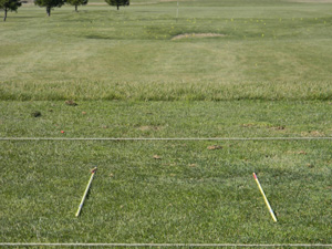 golf alignment sticks