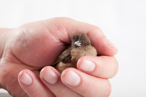 holding a baby bird putting stroke